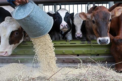 Минфин: импортеры кормовых добавок могут быть избавлены от доплаты НДС