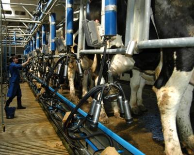 «Русмолко» впрошлом году произвела 35,8 тыс. тонн молока