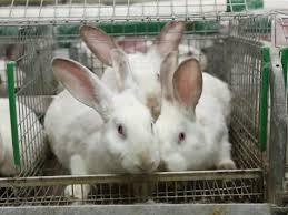 В регионах набирает обороты промышленное кролиководство
