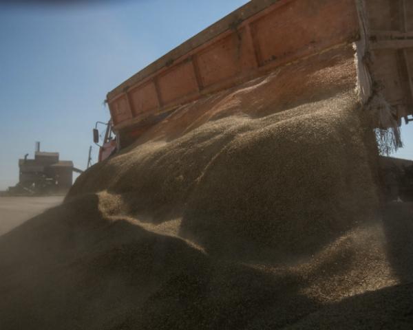 Поставлен новый зерновой рекорд. Российский урожай превысит 118 млн тонн