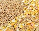 «Совэкон» понизил прогноз поэкспорту зерновых