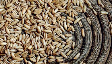 В «Неофорсе» учат хранить непросохшее зерно