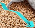 Урожай зерновых может упасть до85 млн т