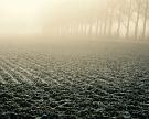 Заморозки вПриволжье замедлили развитие агрокультур