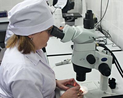 «Щелково Агрохим» пересадит эмбрионы