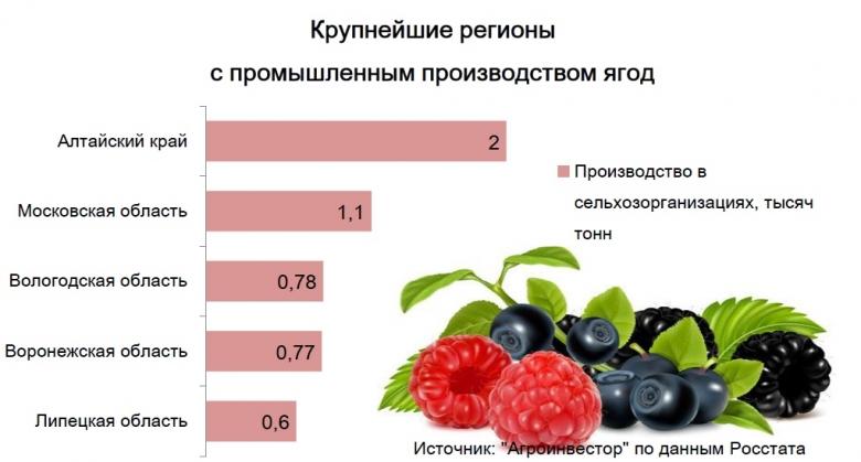 Производство ягод в сельхозорганизациях