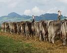 Бизнес заинтересовался фермерскими кооперативами