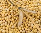 «Эфко» в2017 году запустит вБелгородской области комплексный селекционно-семеноводческий центр попроизводству семян сои