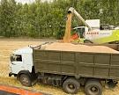 Сбор зерна достиг 6 млн т