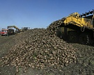 «Заинский сахар» планирует увеличить срок переработки до семи месяцев