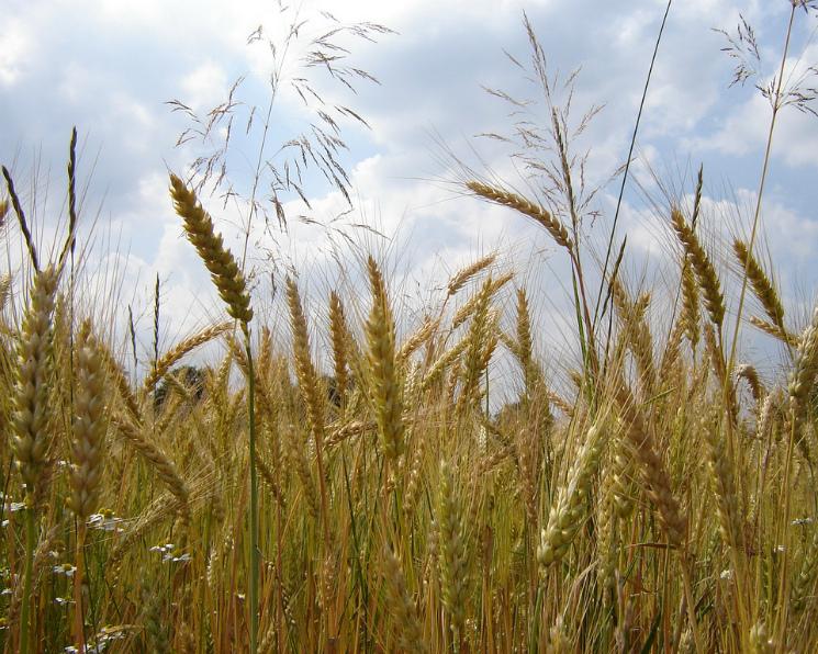 Российский рынок органических продуктов к2020 году вырастет вдвое