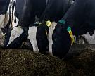 Производители молока предупредили об остановке инвестпроектов