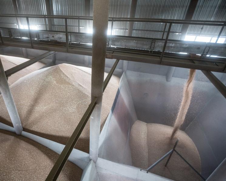 Минсельхоз ждет снижения стоимости зерна весной