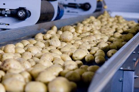 Картофель в России продолжает дорожать