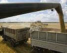 Экспортные цены на пшеницу за неделю выросли до $167 за тонну