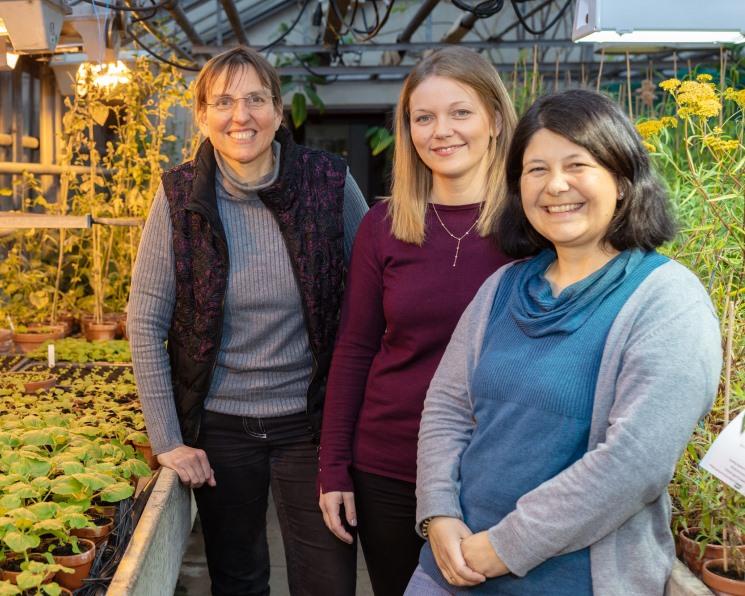 Ученые открыли механизм борьбы растений с нехваткой железа