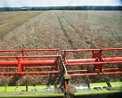 Объем производства агропродукции вырос на 40% за 10 лет