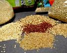 Bayer будет продавать в России семена Euralis