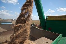 Экспортеров предупредили о пошлинах на пшеницу