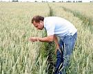 Аграрный опыт: 70% семенного материала в«ГКАгро-Белогорье»— это сорта местной селекции
