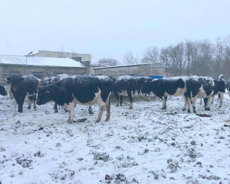 Водном изотдаленных районов Камчатки впервые за20 лет открыли молочную ферму