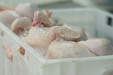Казахстан и Белоруссия запретили ввоз российской птицы