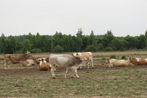 Совладелец «Лукойла» обвинил коров в ухудшении экологии