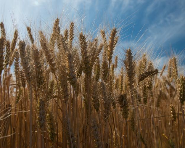 Натоп-10 регионов пришлось 40% производства сельхозпродукции встране