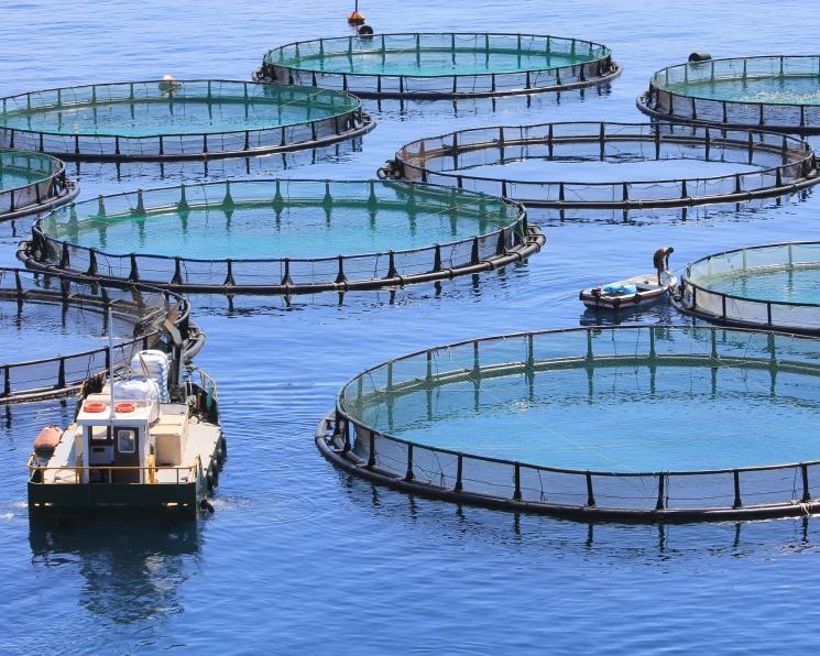 Особенности национальной аквакультуры— II. Кто инвестирует в проекты по выращиванию рыбы и морепродуктов
