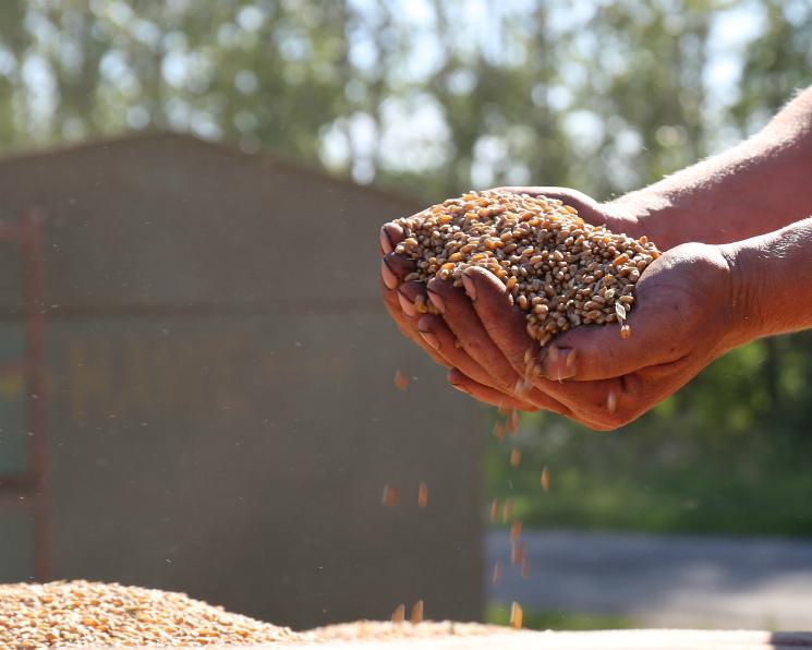 Урожай зерна вэтом году составил 134,1 млн тонн