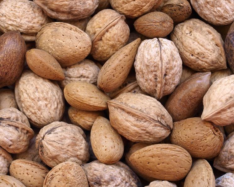 Доля России в мировом сборе орехов не превышает 1%