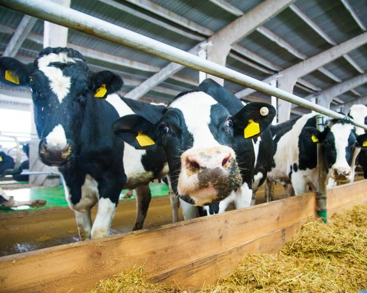 Молоко от олигарха. Новый проект «Румелко-Агро» может обойтись ее владельцу в 18млрдруб.