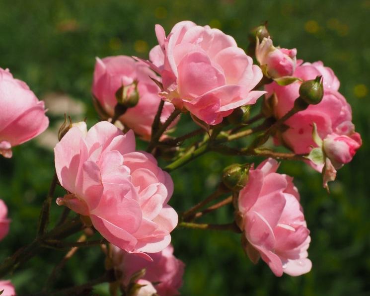 ВРоссии лишь 7% теплиц выращивают цветы