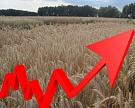 Зерно дорожает из-за нестабильности на Украине и плохой погоды в США
