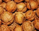 Инвестор вложит 1 млрд рублей впроизводство орехов наКубани