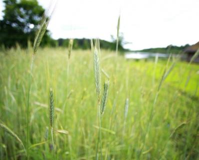 Способы увеличения доходов спомощью регуляторов роста растений