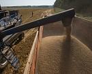 Мировые цены на пшеницу за неделю выросли