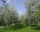 «Агро-Белогорье» займется садоводством
