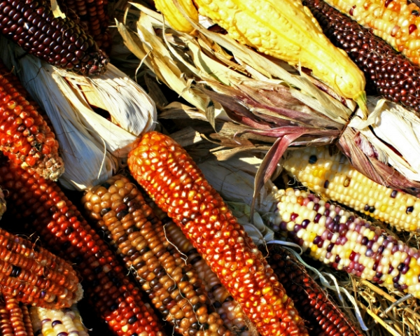 Кукурузная волна: сравнительный анализ ситуации нарынке кукурузы с2006 по2016 год