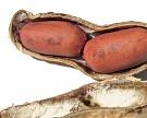 ВСША создан прибор для измерения качества скорлупы арахиса