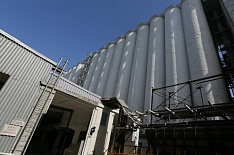Правительство решило продать 1,5 млн тонн зерна из госфонда