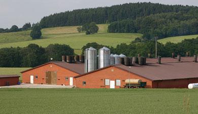 Мукомольно-зерновой кластер