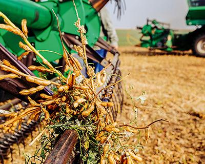 Выгодная культура: чем обусловлен интерес к выращиванию сои