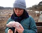 Минсельхоз поддержит птице- и свиноводов