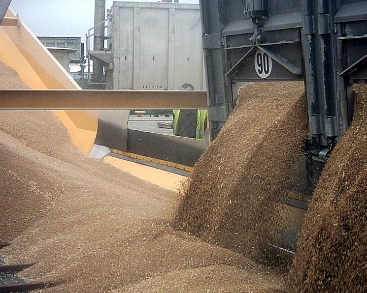 Всентябре вывоз зерна впервые превысил 5 млн тонн