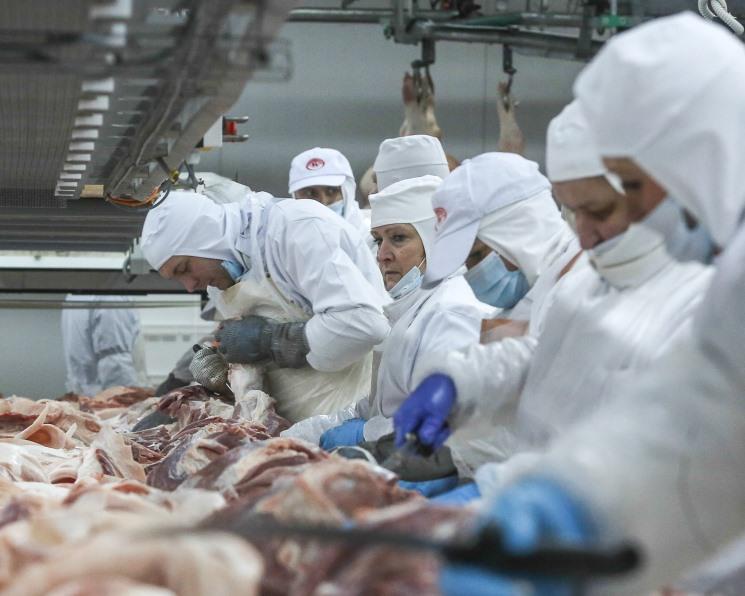 За пять лет производство свинины увеличится на 1,1 млн тонн
