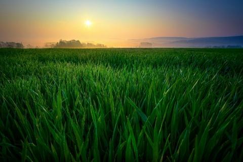 Идти прежним курсом: агросектор рассчитывает на преемственность госполитики в отрасли
