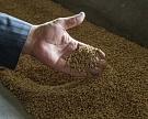 Пшеница третьего класса дешевеет быстрее других