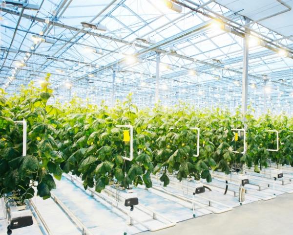 Самообеспеченность по овощам достигла 90%