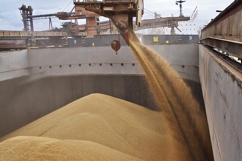 Эксперты прогнозируют рост цен на пшеницу